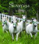 Koledar Slovenija 2021 S